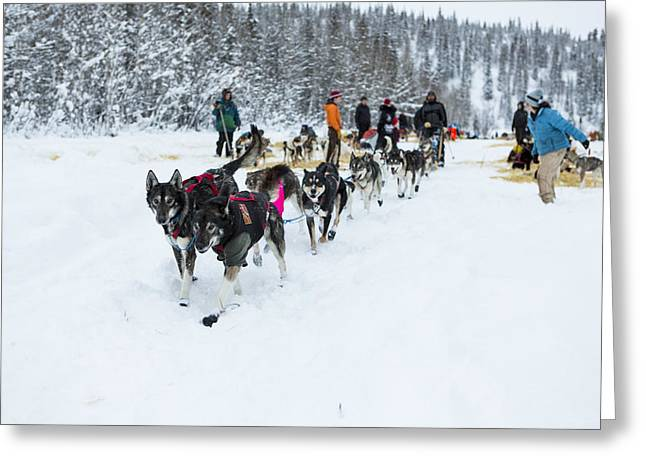 Winter Sports Prints Greeting Cards - Hitting the Snowy Trail Greeting Card by Tim Grams