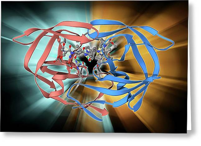 Hiv-1 Protease And Inhibitor Greeting Card by Laguna Design