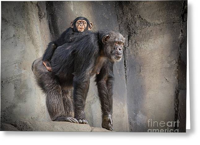 Chimpanzee Greeting Cards - Hmmmm Greeting Card by Jamie Pham