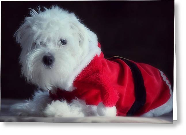 Sleepy Maltese Greeting Cards - Ho Ho Ho Merry Christmas Greeting Card by Melanie Lankford Photography