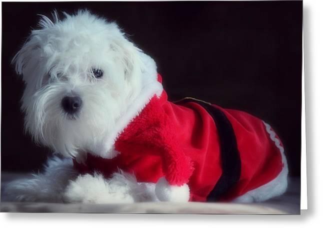 Sleepy Maltese Greeting Cards - Ho Ho Ho Merry Christmas Greeting Card by Melanie Lankford Photography