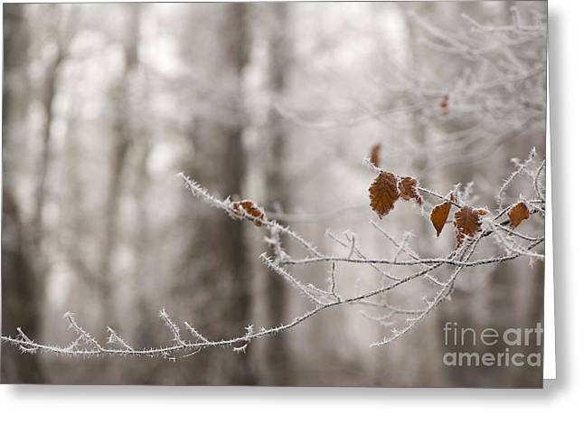 Haze Greeting Cards - Hoar Frost Greeting Card by Anne Gilbert