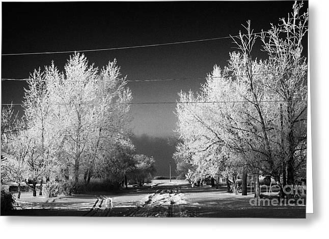 hoar frost covered trees on street in small rural village of Forget Saskatchewan Canada Greeting Card by Joe Fox