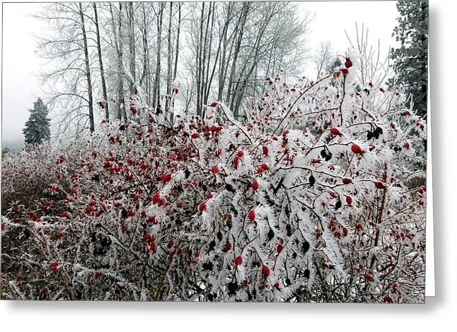 Ice Fog Greeting Cards - Hoarfrost 12  Greeting Card by Will Borden