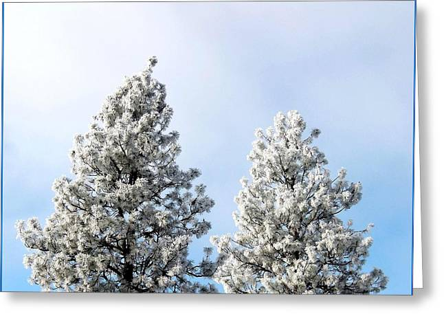 Ice Fog Greeting Cards - Hoarfrost 21 Greeting Card by Will Borden
