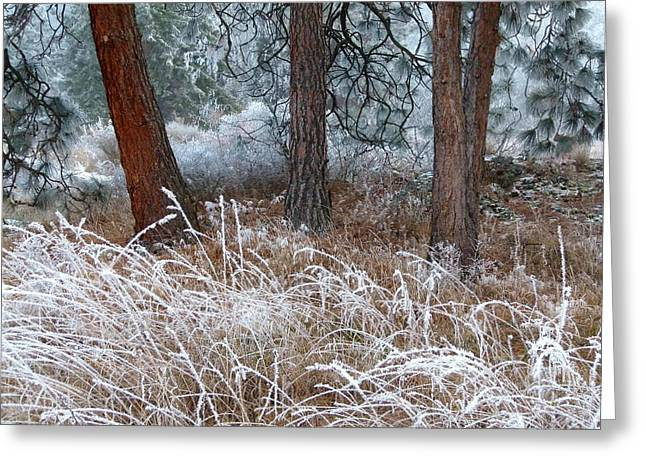 Ice Fog Greeting Cards - Hoarfrost 22 Greeting Card by Will Borden