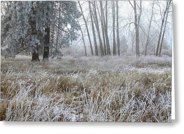 Ice Fog Greeting Cards - Hoarfrost 24 Greeting Card by Will Borden