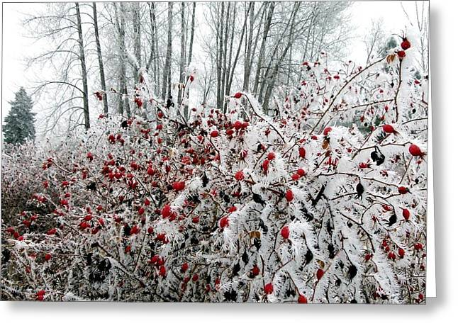 Ice Fog Greeting Cards - Hoarfrost 25 Greeting Card by Will Borden