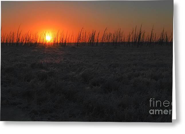 Alaska Greeting Cards - Hoarfrost Sunset Greeting Card by Susan Serna