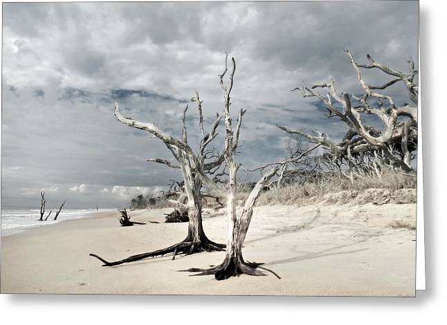 South Carolina Infrared Landscape Greeting Cards - Hobcaw Boneyard Beach 2 Greeting Card by Deborah Smith