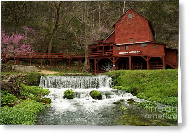 Red Bud Trees Greeting Cards - Hodgson Mill Greeting Card by Chris  Brewington Photography LLC