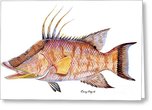 Bonefish Greeting Cards - Hog Fish Greeting Card by Carey Chen