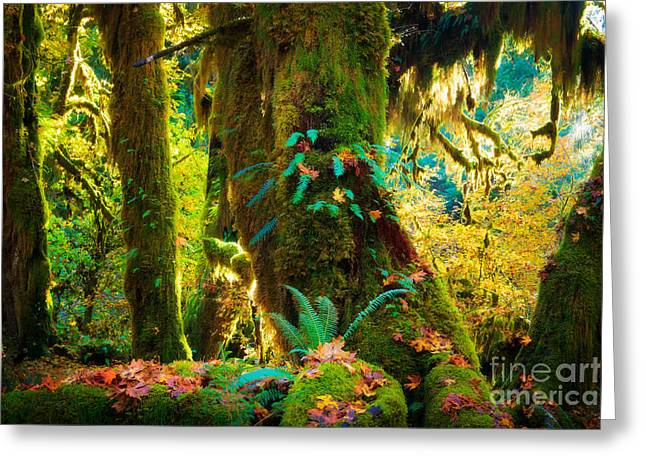 Moss Greeting Cards - Hoh Grove Greeting Card by Inge Johnsson