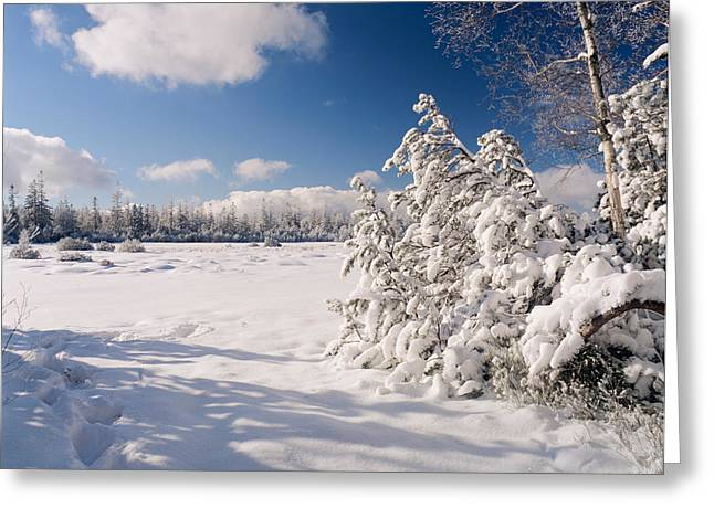 Temperature Greeting Cards - Hohlohsee Lake In Winter At Nature Greeting Card by Panoramic Images