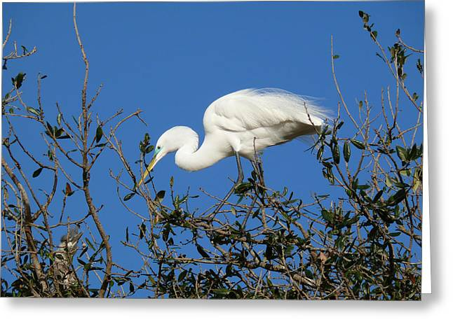 Restaurant On Top Greeting Cards - Hold on Im Coming Greeting Card by Susan Duda