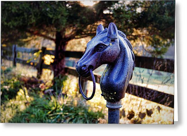 Cedar Fence Greeting Cards - Hold Your Horses Greeting Card by Cricket Hackmann