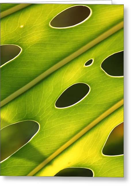 Holier Greeting Cards - Holey Light Greeting Card by Amy Gallagher