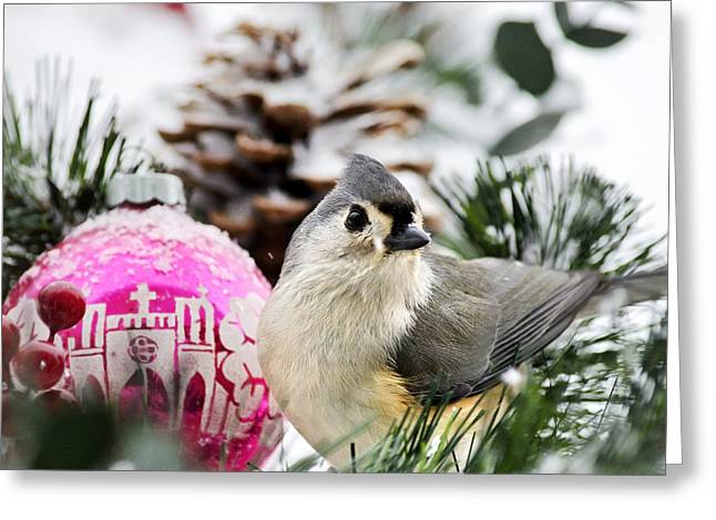 Red Birds In Snow Greeting Cards - Holiday Bird Titmouse Square Greeting Card by Christina Rollo