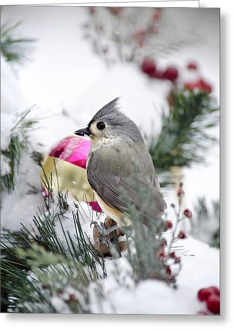 Holiday Cheer With A Titmouse Greeting Card by Christina Rollo