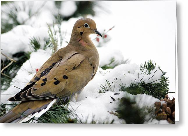 Mourning Dove Greeting Cards - Holiday Dove Greeting Card by Christina Rollo