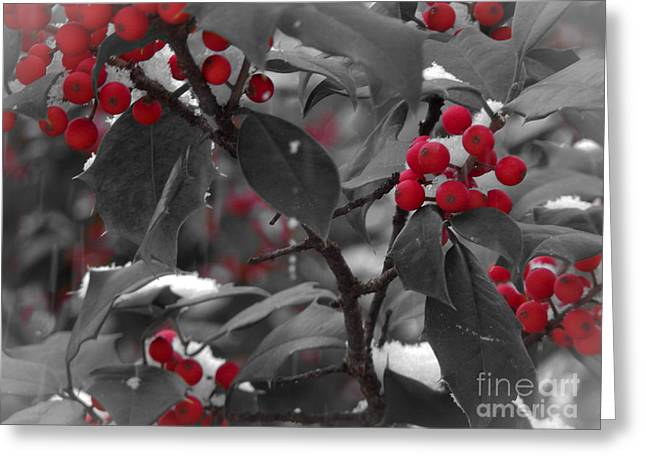 Black Berries Greeting Cards - Holiday Holly Greeting Card by David Rucker