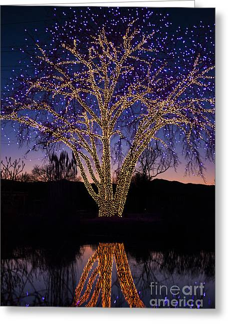 Celebrate Photographs Greeting Cards - Holiday Lights Greeting Card by Juli Scalzi