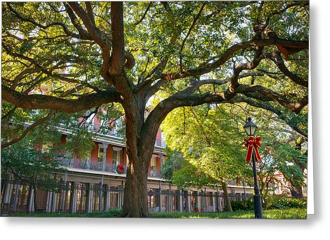 French Quarter Greeting Cards - Holiday Oaks Greeting Card by Chris Moore