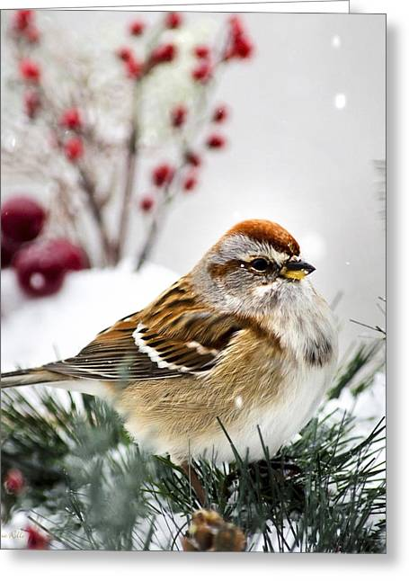 Sparrow Greeting Cards - Holiday Tree Sparrow Square Greeting Card by Christina Rollo