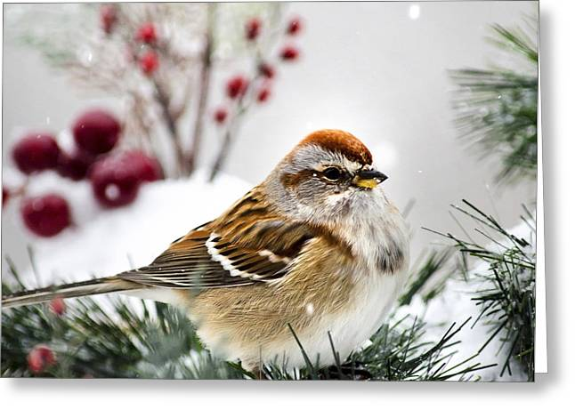 Holiday Tree Sparrow Square Greeting Card by Christina Rollo