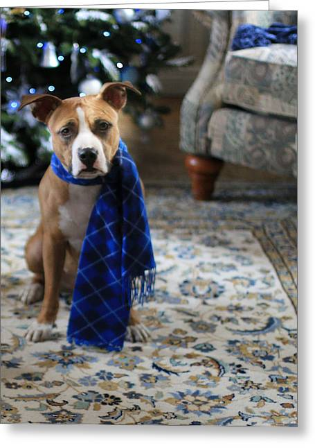 Apbt Greeting Cards - Holiday Warmth Greeting Card by Shelley Neff
