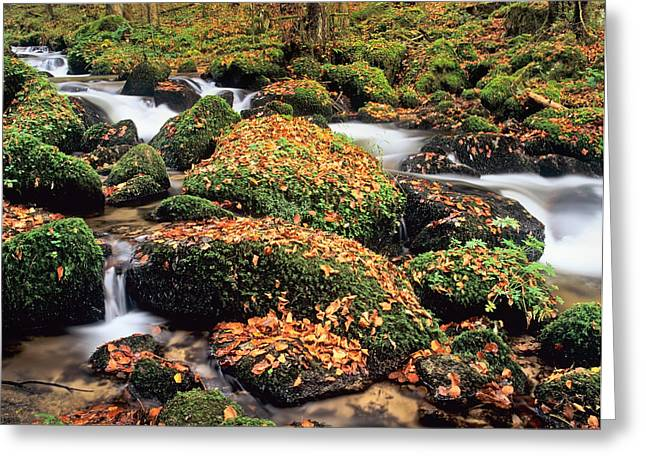 Hollbach Stream Near Gorwhil, Black Greeting Card by Panoramic Images