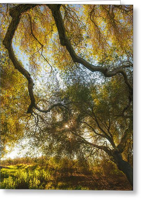 Backlit Greeting Cards - Hollenbeck Morning Greeting Card by Joseph Smith