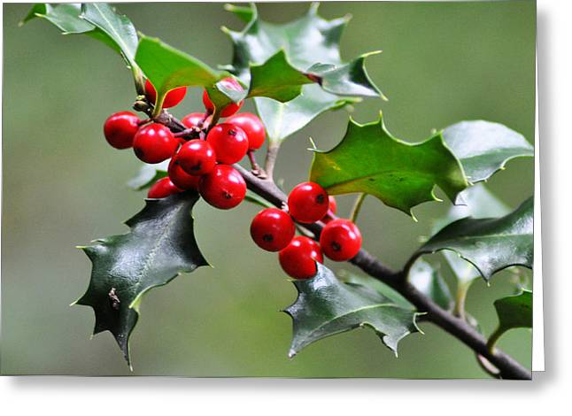 Halle Berry Greeting Cards - Holly Berries Greeting Card by Bill Cannon