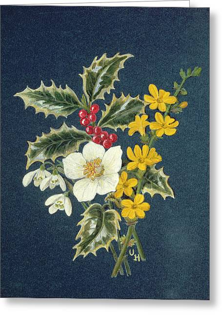 Winter Flowers Greeting Cards - Holly, Christmas Rose, Snowdrop And Winter Jasmine Wc On Paper Greeting Card by Ursula Hodgson