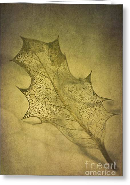 Framework Greeting Cards - Holly Leaf Greeting Card by Jan Bickerton