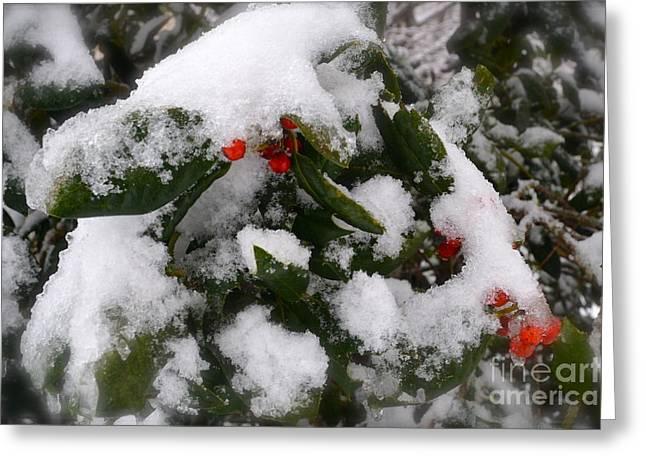 Berries Framed Prints Greeting Cards - Holly Greeting Card by Lynn R Morris