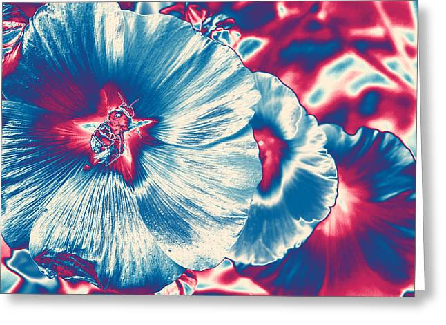 Shower Curtain Greeting Cards - Hollyhock Popart Greeting Card by  ILONA ANITA TIGGES - GOETZE  ART and Photography