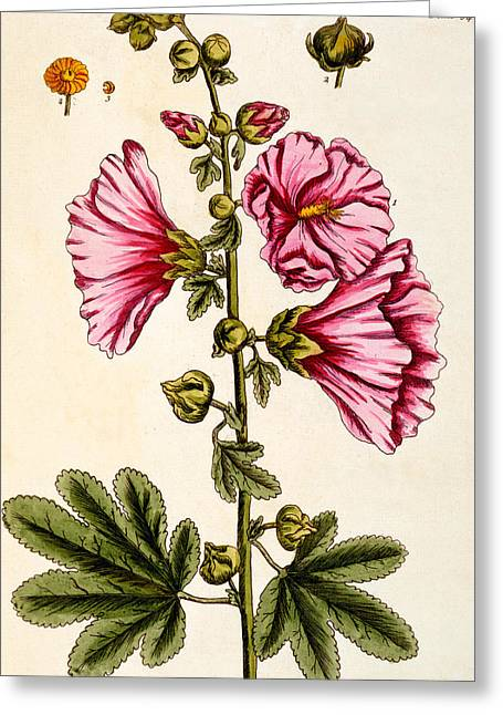 Hollyhocks Greeting Cards - Hollyhocks Greeting Card by Elizabeth Blackwell