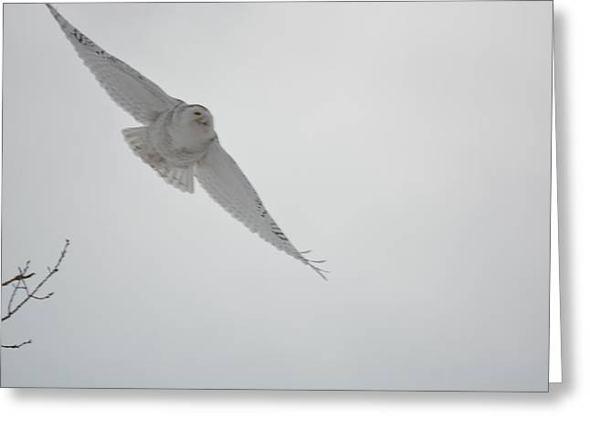 Recently Sold -  - Surprise Greeting Cards - Holy Spirit Greeting Card by Jesse Olson