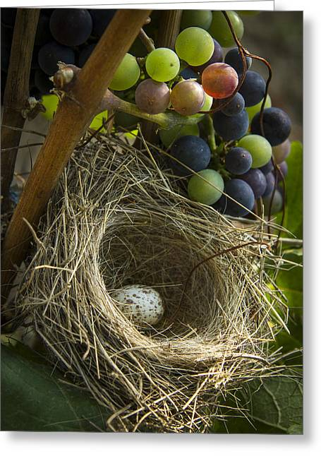 Grape Vineyard Greeting Cards - Home Alone Greeting Card by Jean Noren