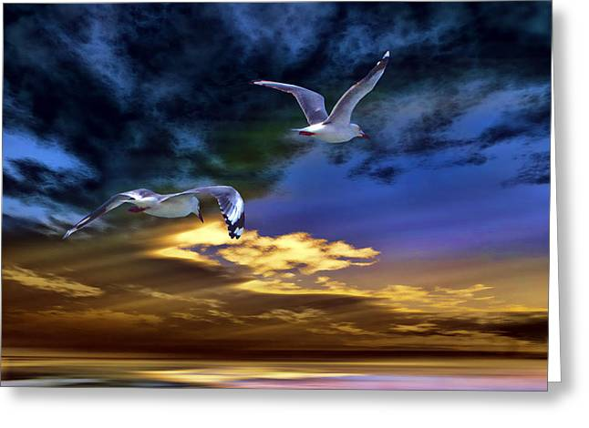 Tern Paintings Greeting Cards - Home Before Nightfall Greeting Card by Tyler Robbins