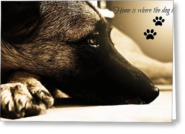 Loyality Greeting Cards - Home is Where The Dog Is Greeting Card by Clare Bevan