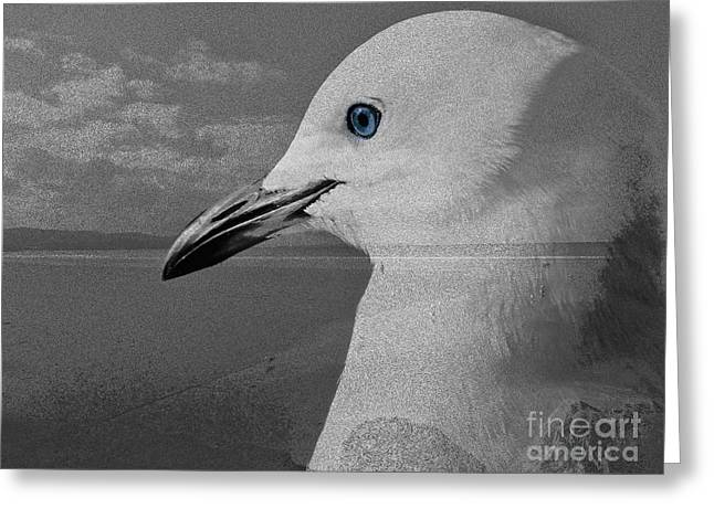 Sea Birds Greeting Cards - Home of the Sea Gull Greeting Card by Karen Lewis