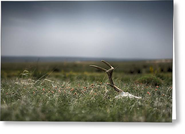 Scull Prints Greeting Cards - Home on the Range Greeting Card by Garett Gabriel