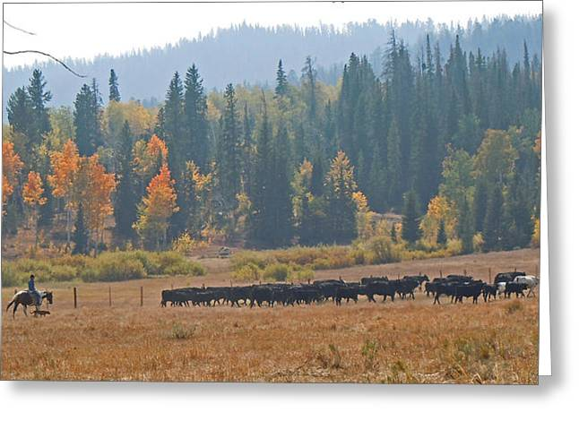 The Fall Of The Cowboy Greeting Cards - Home on the Range Greeting Card by Heather Coen