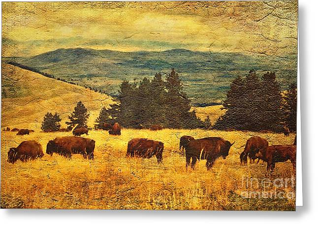 Bison Range Greeting Cards - Home on the Range Greeting Card by Lianne Schneider