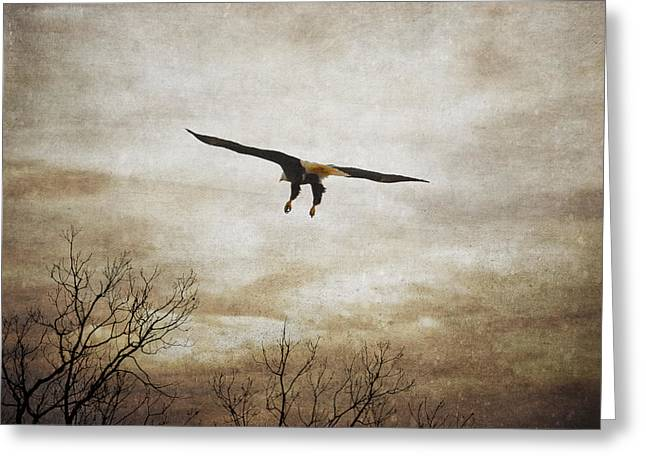Eagle In Clouds Greeting Cards - Home Safely Greeting Card by Jai Johnson