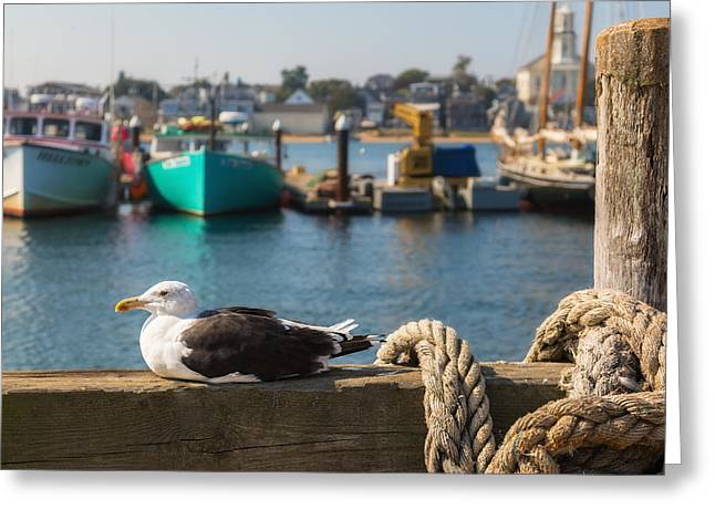Provincetown Greeting Cards - Home Sweet Home Greeting Card by Bill  Wakeley