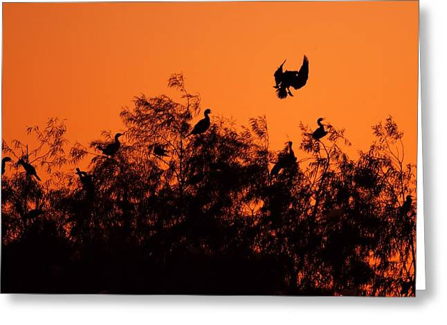 Wildlife Celebration Greeting Cards - Birds Silhouette Against Setting Sun Greeting Card by Katrina Lau