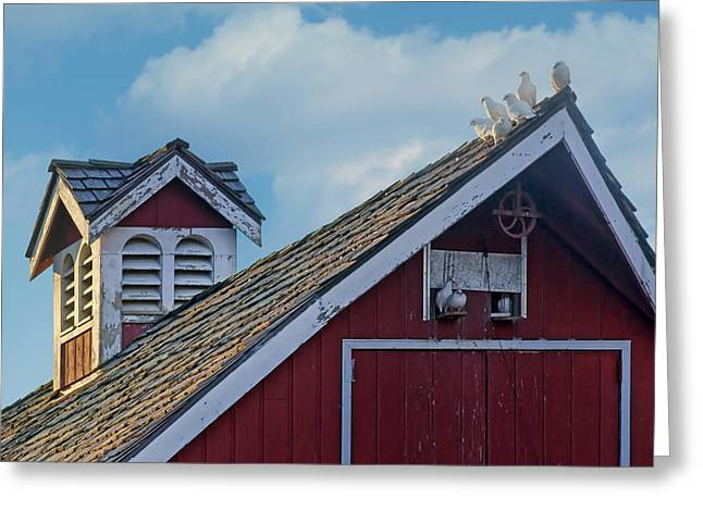 Red Roofed Barn Greeting Cards - Home to Roost Greeting Card by Nikolyn McDonald